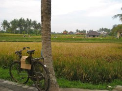 Ubud, Bali, Indonesia