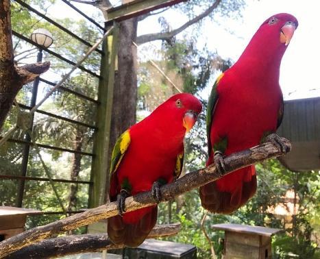Kuala Lumpur Birdpark Malaysia