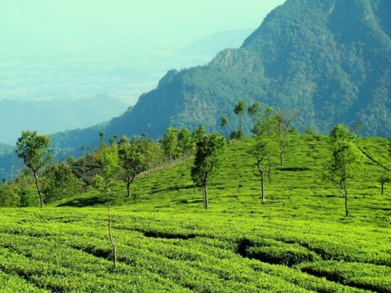 Ooty - Hill Stations In South India
