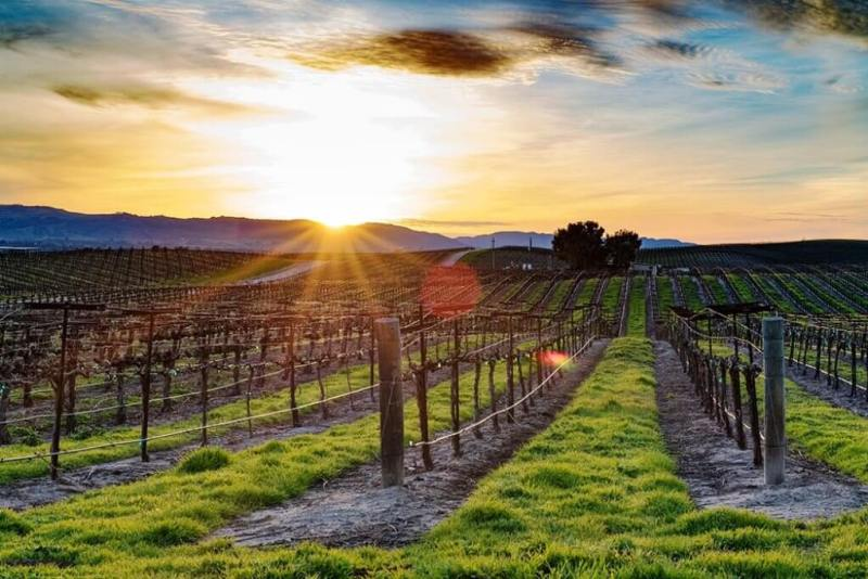 Paso Robles - Weekend Trips From Los Angeles