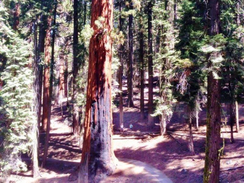 Sequoia National Park - California Summer Vacation