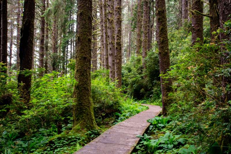 Redwood National and State Parks - California With Kids