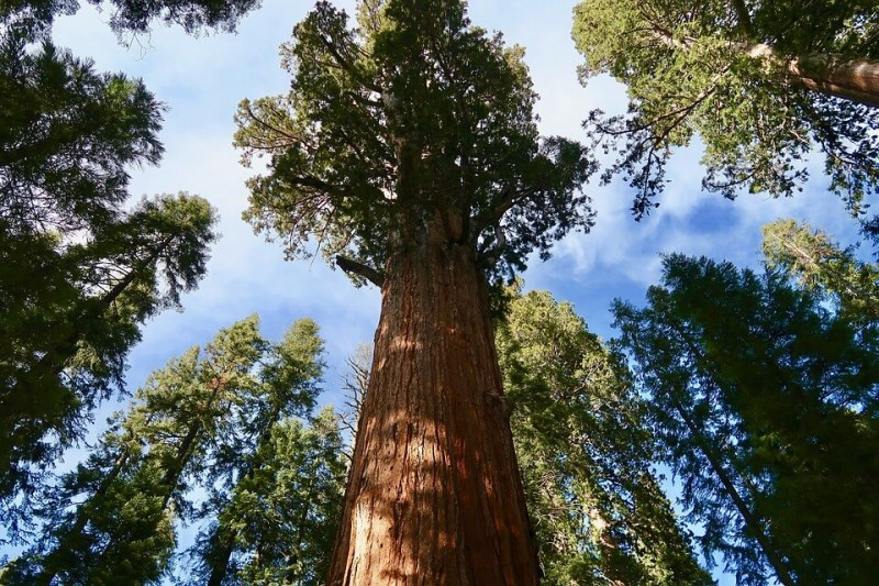 Sequoia National Park- California With Kids