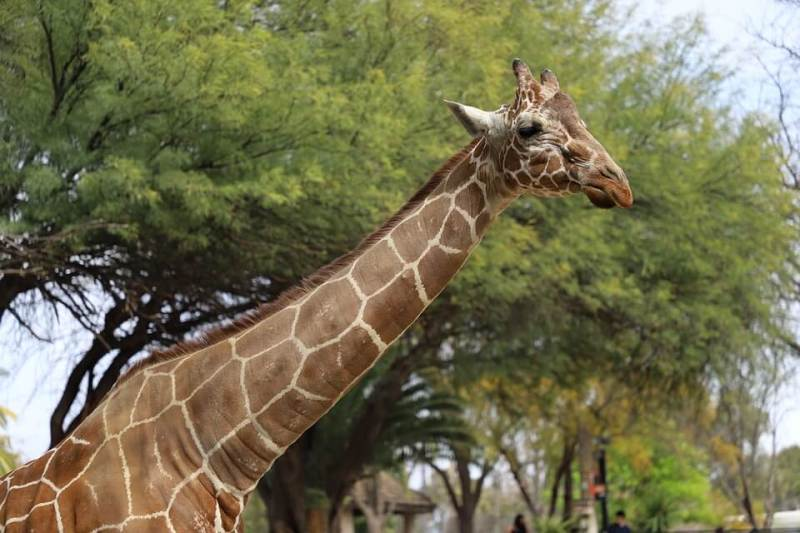 Reid Park Zoo - Things To Do In Tucson With Kids