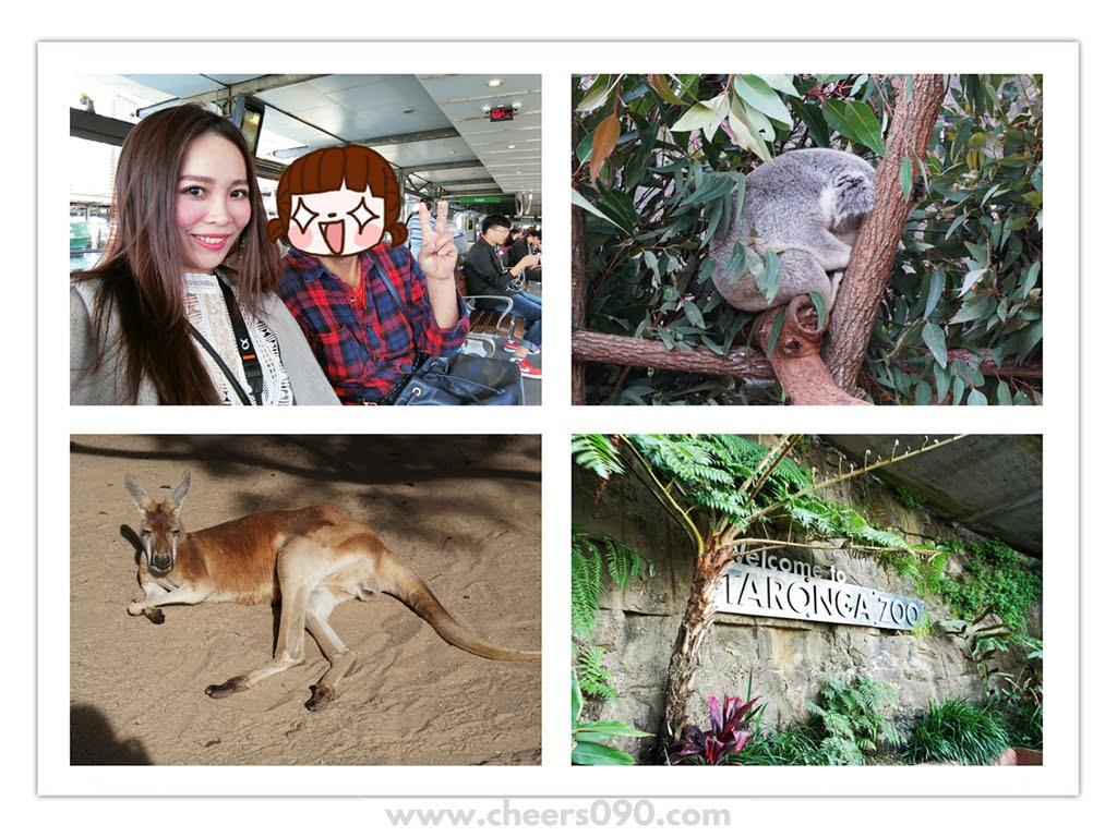澳洲自由行✈ 雪梨塔隆加動物園Taronga Zoo 遊玩全紀錄,以及Klook訂行程教學 !
