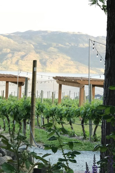 vineyard and valley view, highlighting the Quail's Gate Winery experience