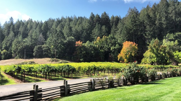 Cheery and Charming_MacMurray Estate Vineyards_MacMurray Ranch