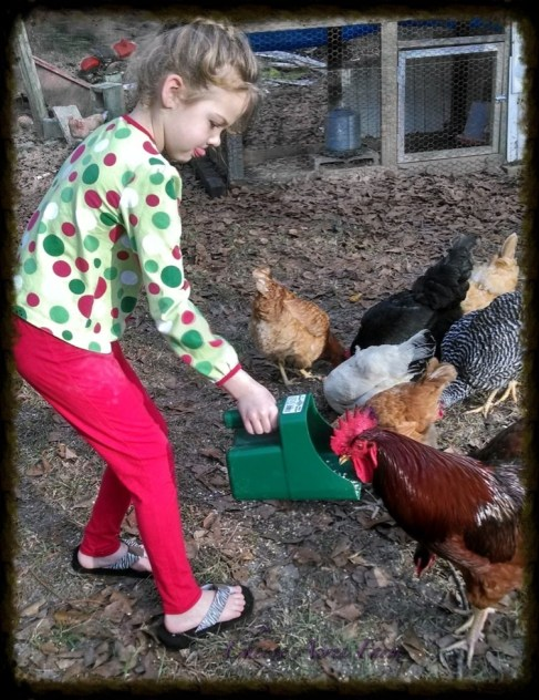 My niece feeding the chickens!