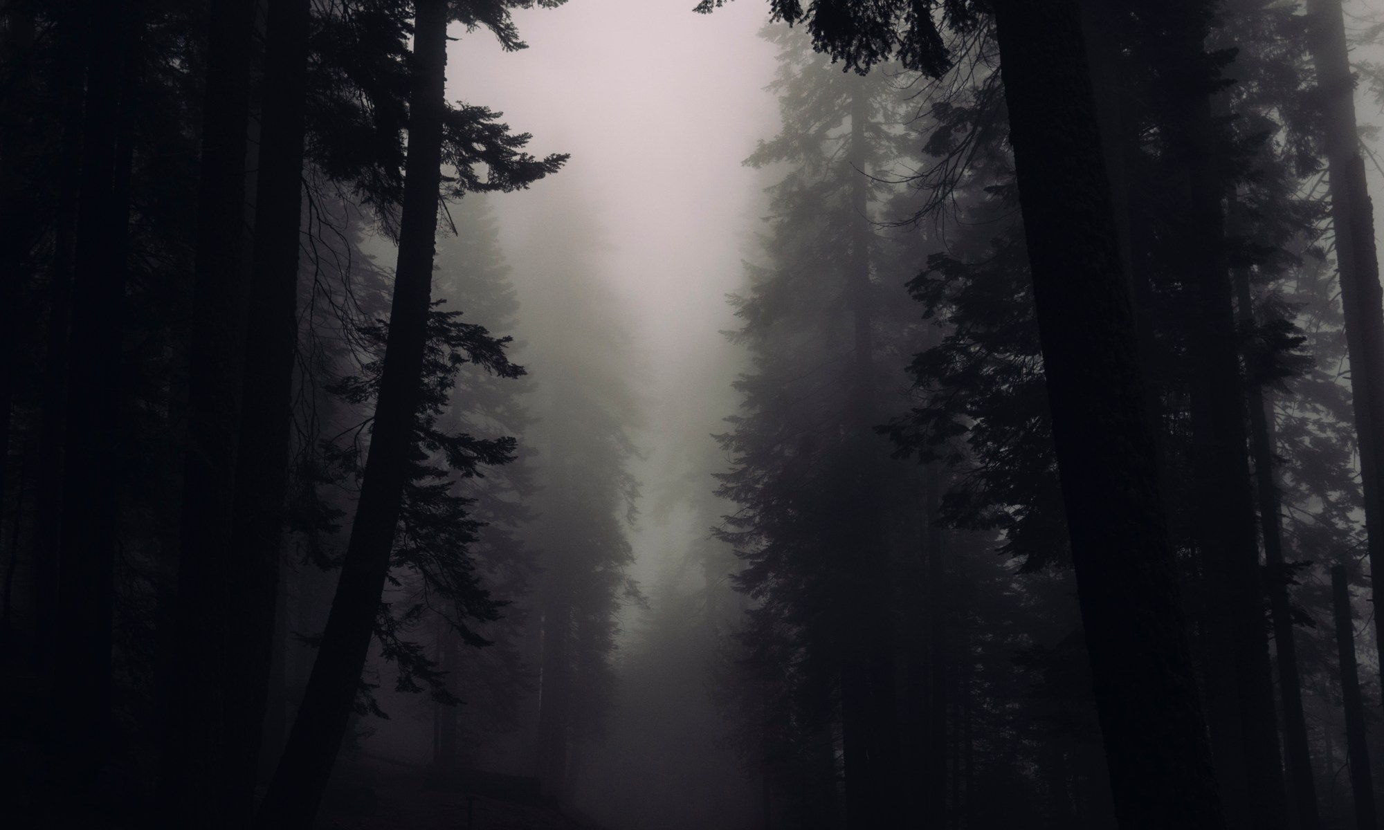 dark misty woods - image from https://stocksnap.io/photo/H6UXS40LRU