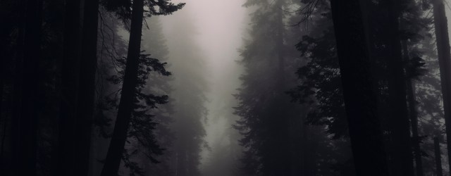 dark misty woods - image from https://stocksnap.io/photo/H6UXS40LRU