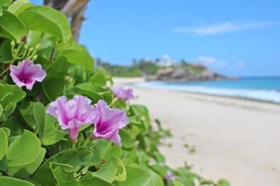 Mahé, Hauptinsel der Seychellen