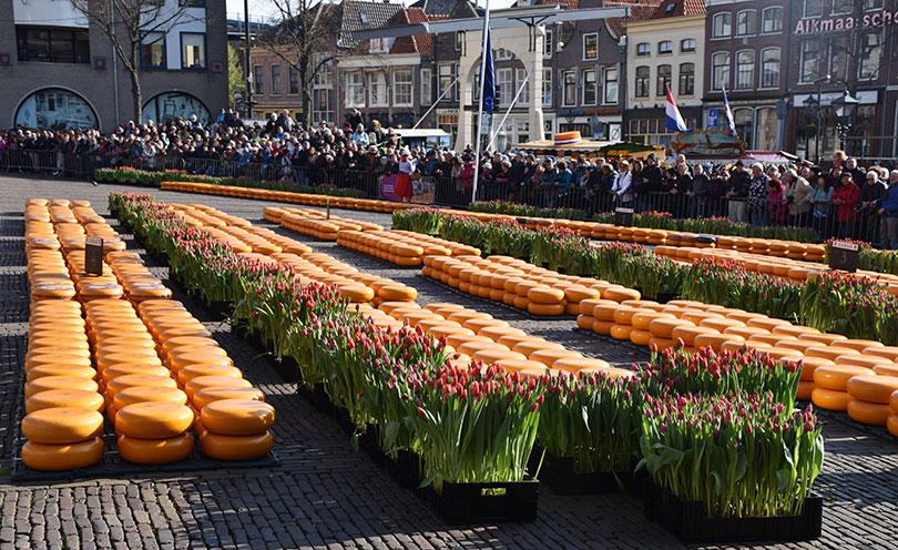 Cheese market at Alkmaar
