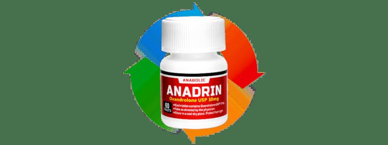アナドリンのサイクル