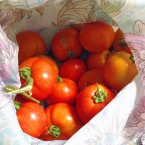 'Maters