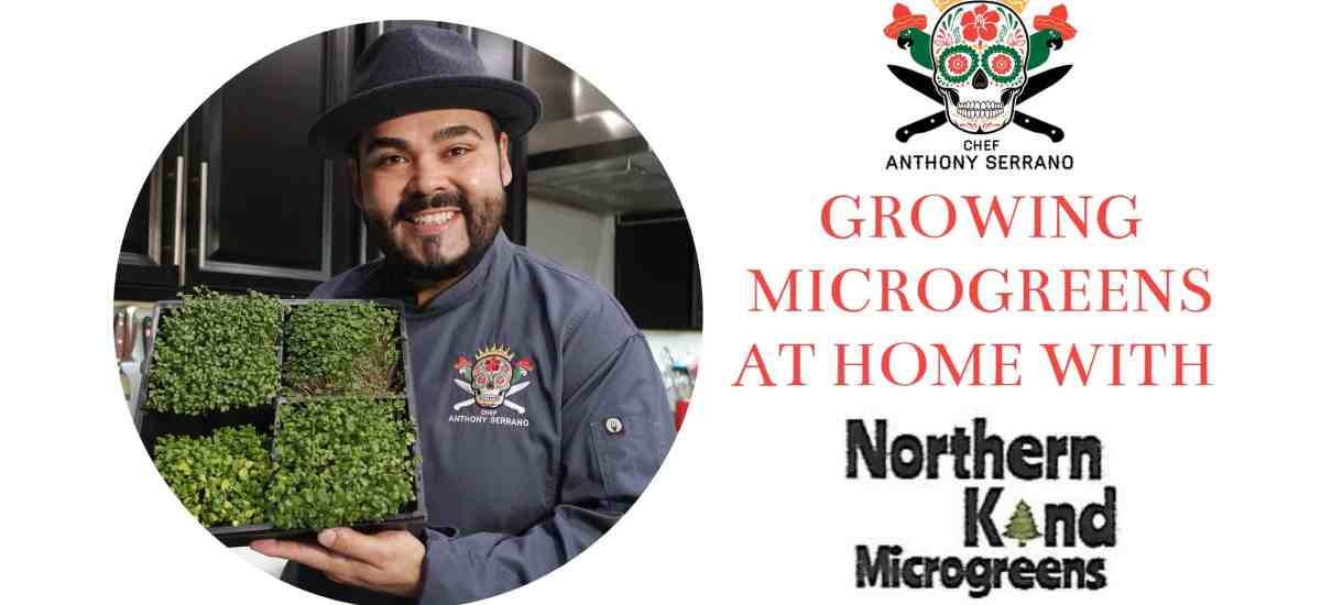 Grow it yourself Microgreens from Nothern Kind Microgreens