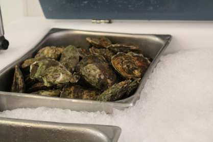 Peconic Bay Oysters