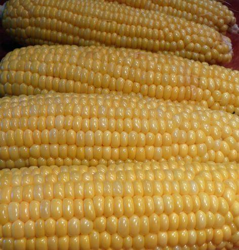corn22