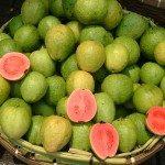 Guava (Apple)_Sakurai Midori_Own Work_Wikipedia