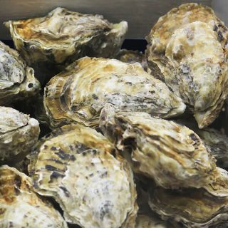 oyster-shells-recycling