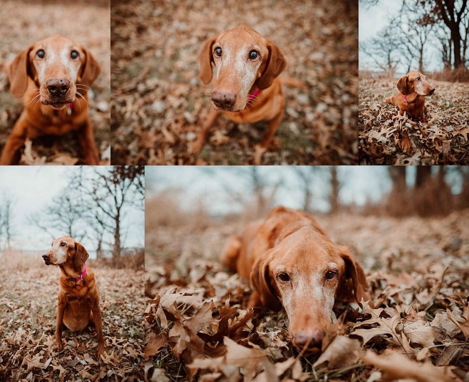 Chelsea Kyaw Photo - Des Moines Iowa Pet Photographer-10