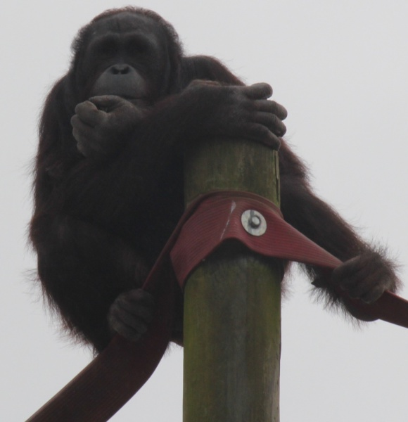 Monkey World 19th February 2014 290