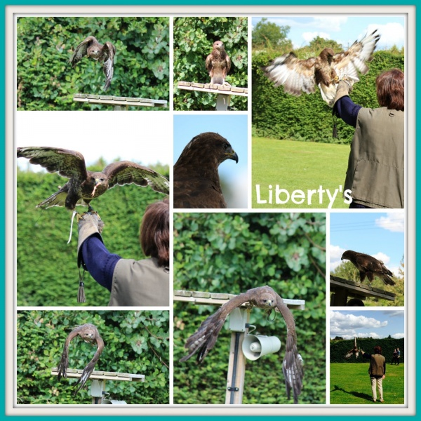 Liberty's Owl and Reptile Centre