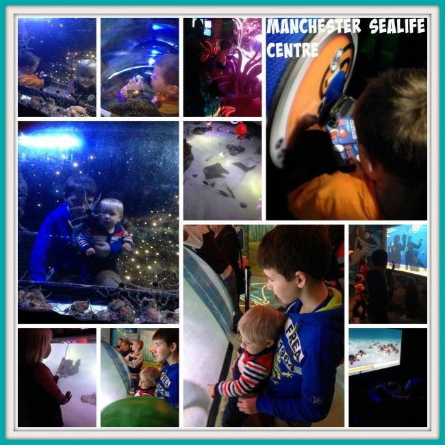 Manchester Sea Life Centre