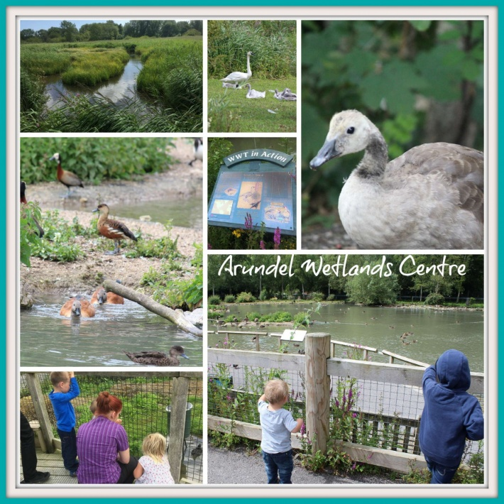 Arundel Wetlands Centre