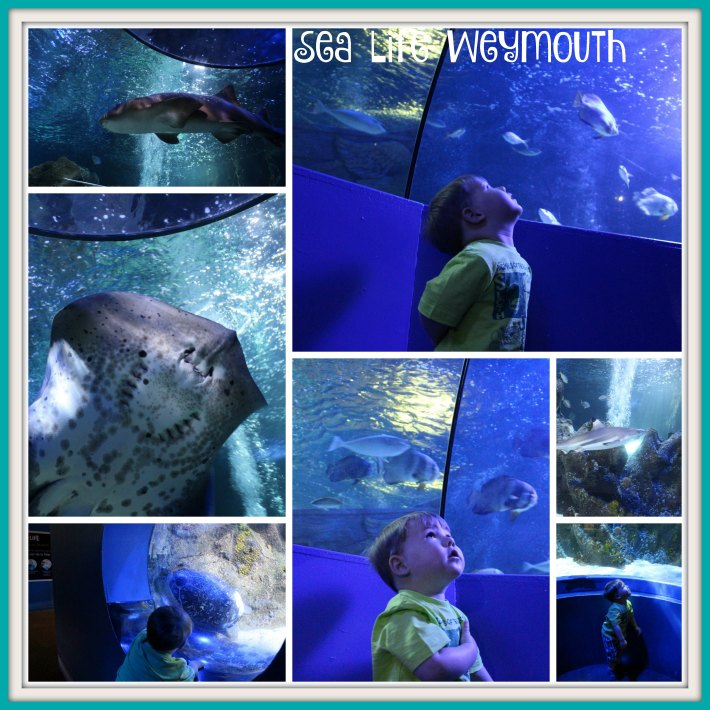 Sea Life Weymouth