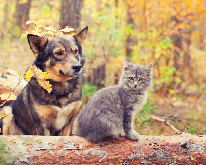 autumn-dog-and-cat