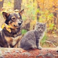 autumn-dog-and-cat