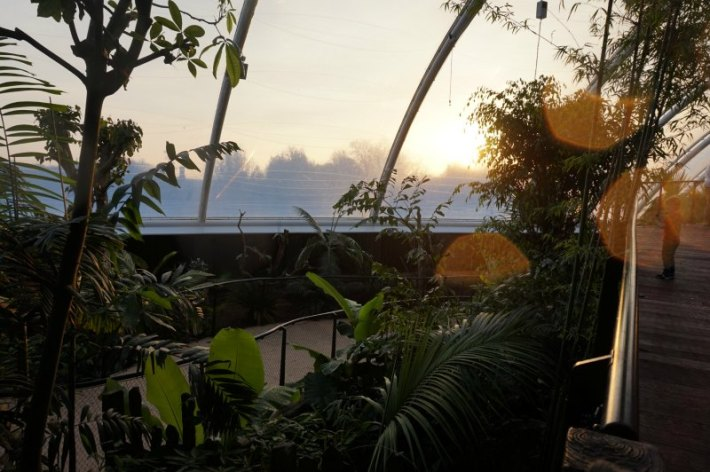 Tropical House - Marwell