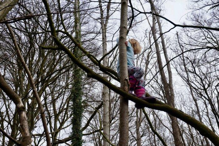Tree Climbing Kingston Lacy