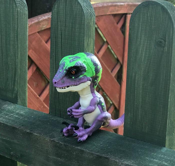 Untamed Raptor