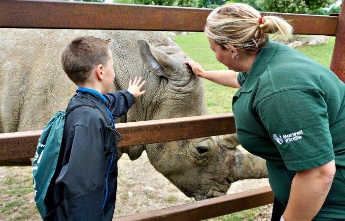 Ear Scratch Rhino