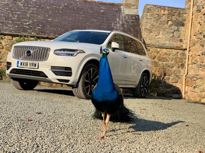 Volvo XC90 Peacock