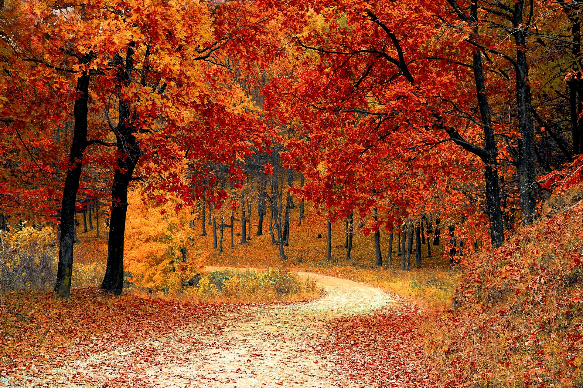 Winding road with fall trees