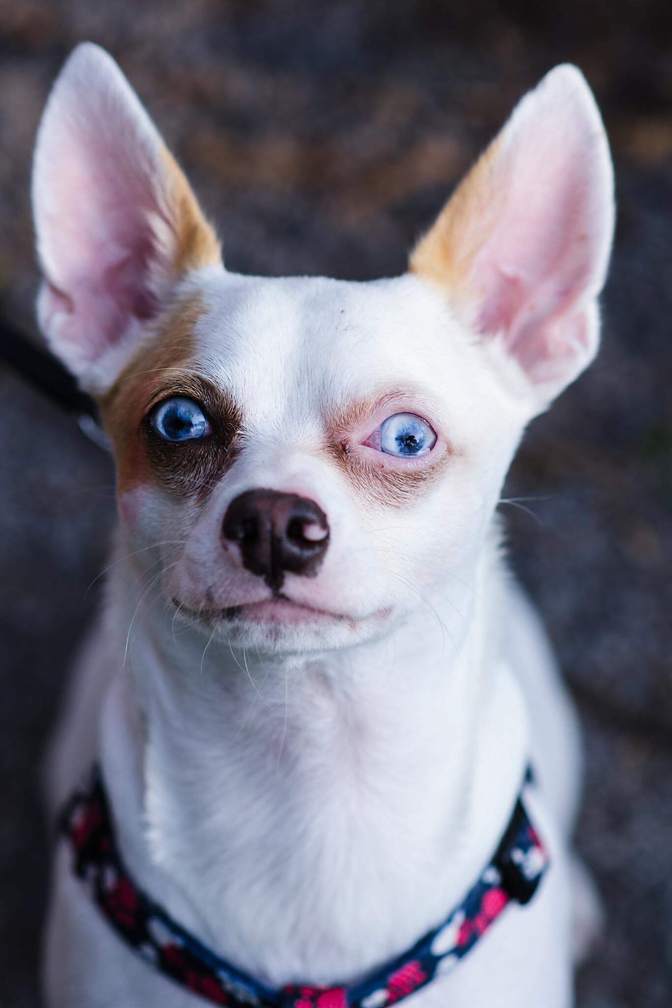 photo of dog at couples engagement session oshawa