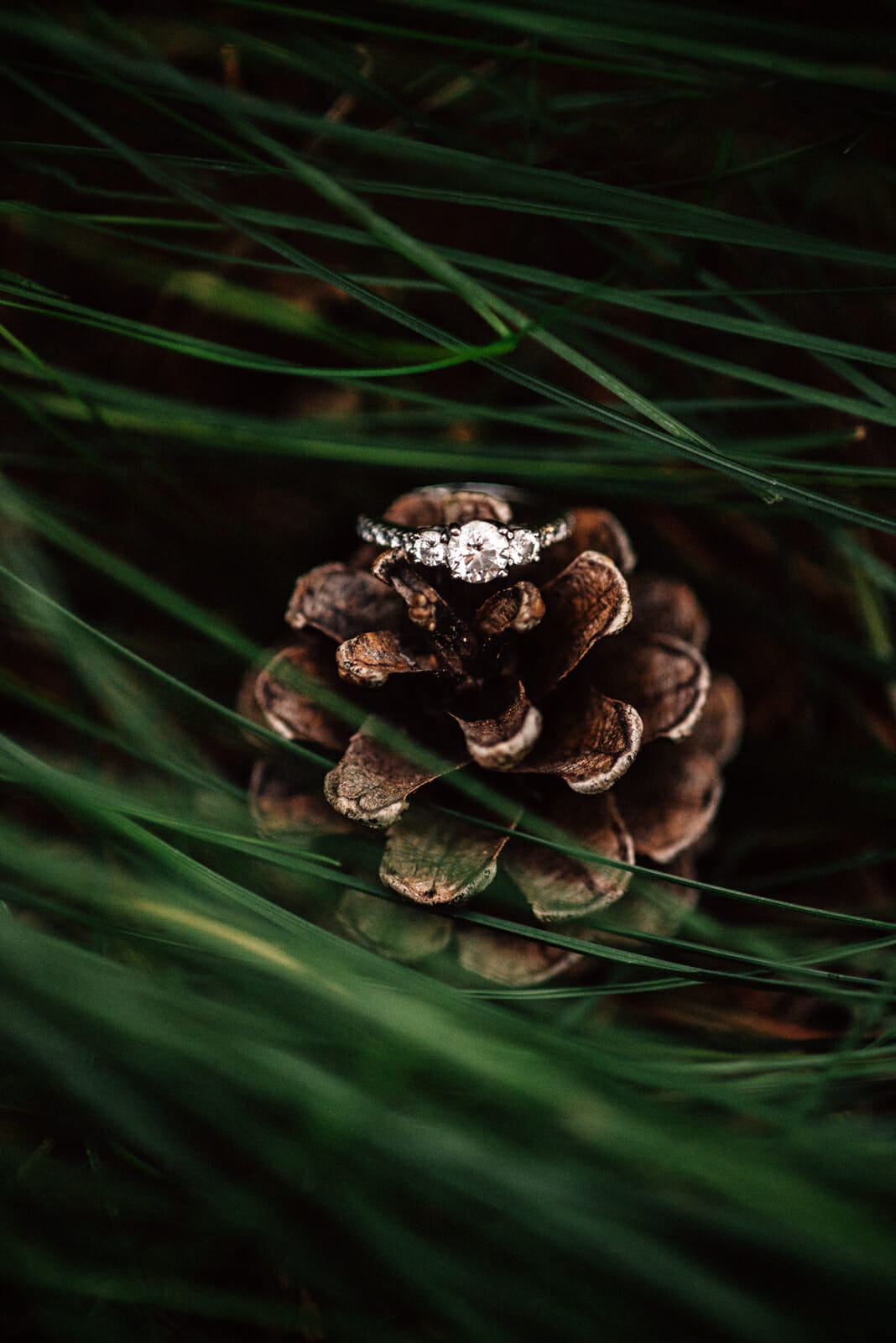 engagement ring on pinecone photography