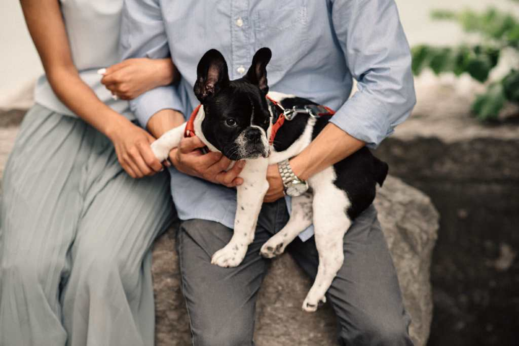 scarborough bluffs surprise proposal photography with puppy