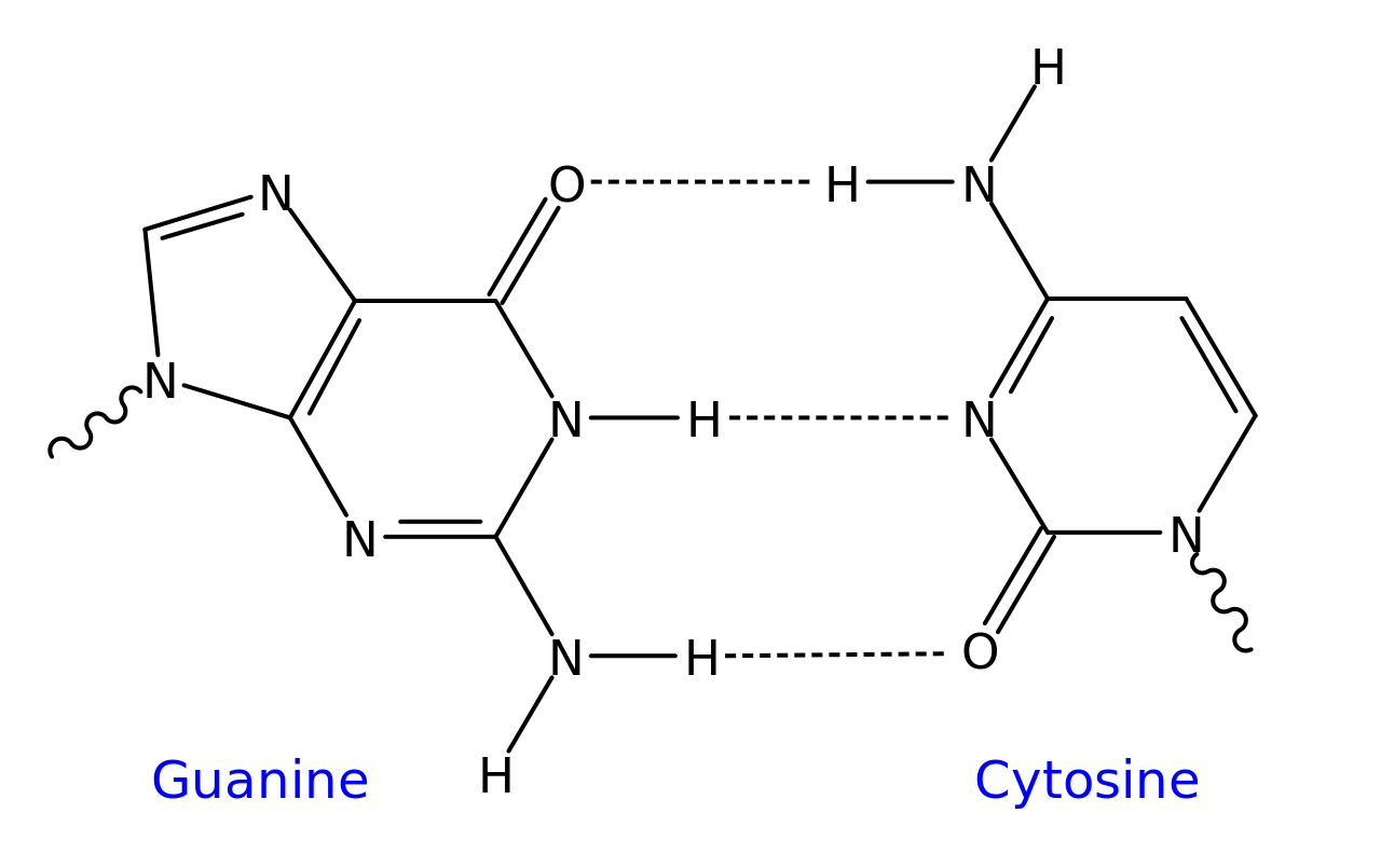 Dna Structure And Function Definition Examples And Diagrams
