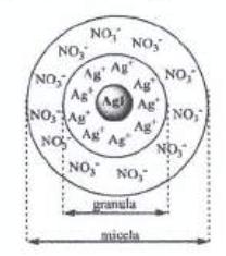 Rys. Model budowy miceli.