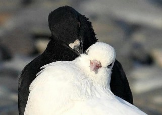 Les oiseaux blancs et les oiseaux noirs 23