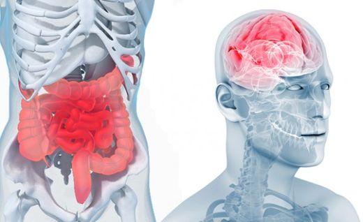 SNI_intestin_cerveau_600x367