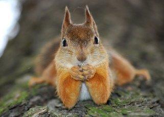L'écureuil 5