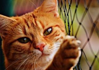 Les gens qui aiment les chats 5