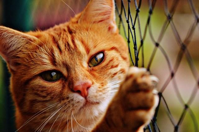 Les gens qui aiment les chats 1