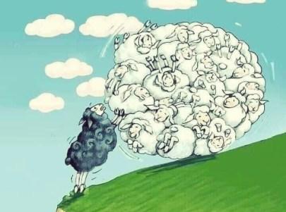 Les moutons noirs 1