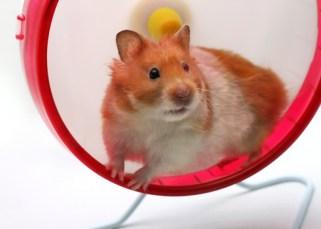 Sortir de la roue de hamster, de sa mélasse de vie dans laquelle on tourne 5