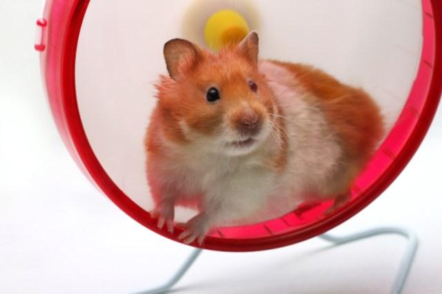 Sortir de la roue de hamster, de sa mélasse de vie dans laquelle on tourne 1
